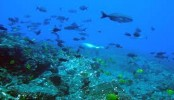 Small marine animals too may depend on sound for communication