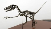 Seventh new dinosaur discovery confirmed in Japan