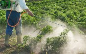 Judicious use of pesticide on fruits and vegetables stressed