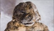 Scientists Attempt To Clone Extinct Ice Age Lion Cubs With Frozen DNA