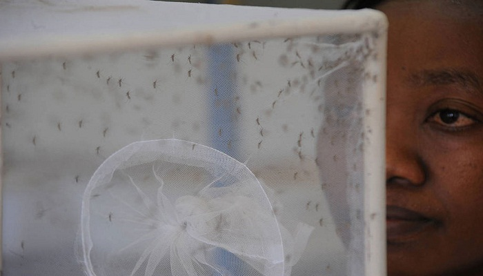Improved water, sanitation services best answer to Zika virus: UN experts
