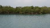 Govt once again bans Shela river route in Sundarbans