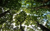 Plants adapt to climate change better than many thought: Study