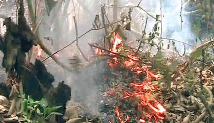 Fire in Sundarbans