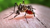 New way to trap, kill mosquito eggs