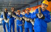 Giant Python found on Malaysian building site
