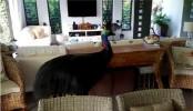 Cassowary's surprise visit spooks Australian family