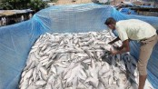 6 tonne jatka seized in Ctg