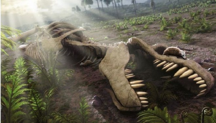Dinosaurs 'in decline' 50 million years before asteroid strike
