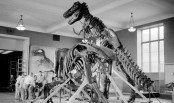 Study: Dinosaurs were declining long before asteroid hit