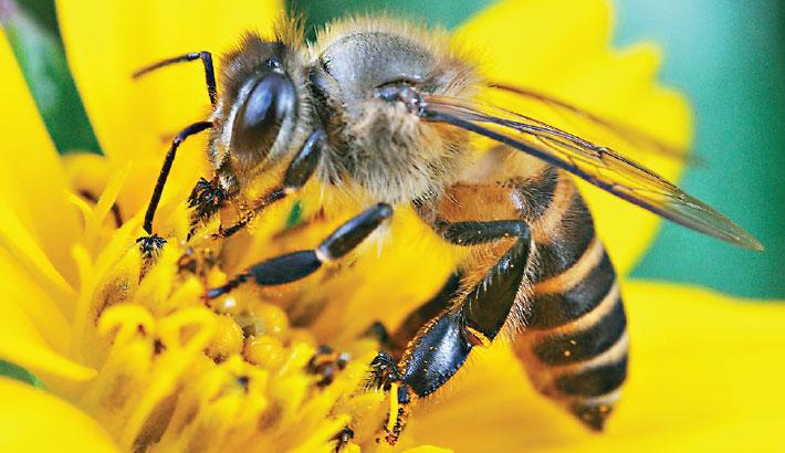 IS A BEE AS SMART AS A SAT NAV?
