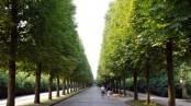 Living around green spaces checks diabetes, BP