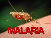 21 countries could be malaria-free by 2020: WHO