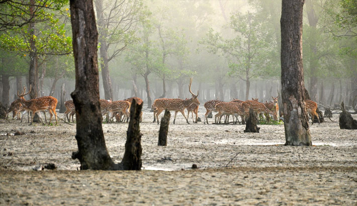 BIFPCL offers funds for wildlife conservation in Sundarbans