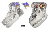New Dinosaur Found: Special Sensory Capabilities