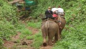 Have we fallen out of love with elephant rides?