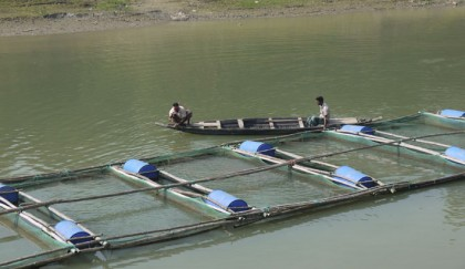 Fish farming makes 8,268 self-reliant