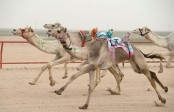 Research reveals genetic history of camels