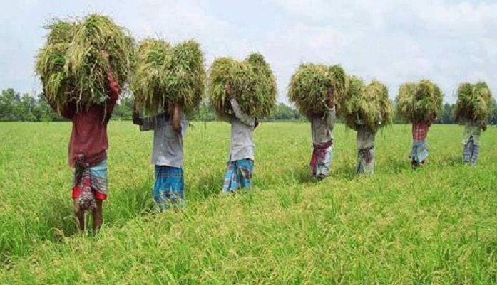 Agriculture Growth Reduces Poverty in Bangladesh