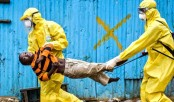 Ebola can persist nine months after recovery: study