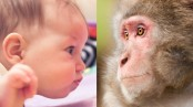 Monkeys and humans share gazing behaviour: Study