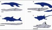 Rapid rise of the Mesozoic sea dragons