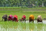 WB to provide $176 million to support 10 lakh farmers