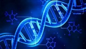 2nd layer of information in DNA confirmed