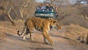 The people who live with tigers