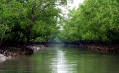 Smart Patrolling begins to save Sundarbans