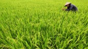 Agricultural loans are losing priority