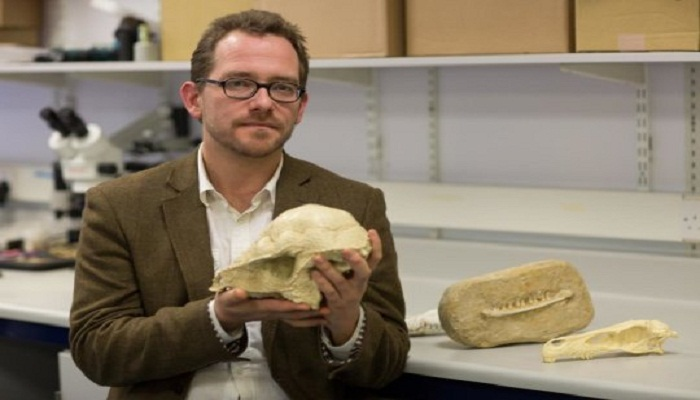 Mammals wiped out with dinosaurs