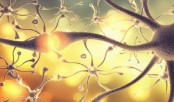 Method to identify different subtypes of neurons