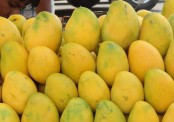 Mango export to euro market halted