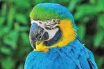 Parrot squawk 'evidence' in murder trial