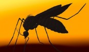 Unusual US Zika virus case baffles experts