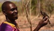 Avian Honeyguides Lead Human Hunters to Honey