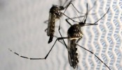 Florida Zika cases 'highly likely' to be first US-based infections
