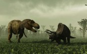 Early animals may have engineered first mass extinction: Study