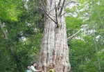 3,000-year-old tree found in China