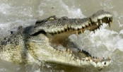 Stranded kayaker rescued after crocodile attack