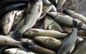 Self-sufficiency in fish expected in 2 years: minister