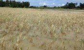 Over 4 lakh farmers to get flood rehabilitation support