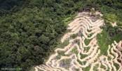 Human impact on environment slowed despite economic growth
