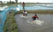 Govt earmarks Tk 792 cr for 52 fisheries, livestock projects