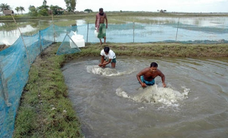 Govt earmarks Tk 792 cr for 52 fisheries, livestock projects