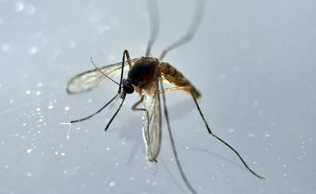 Malaysia reports first pregnant Zika patient