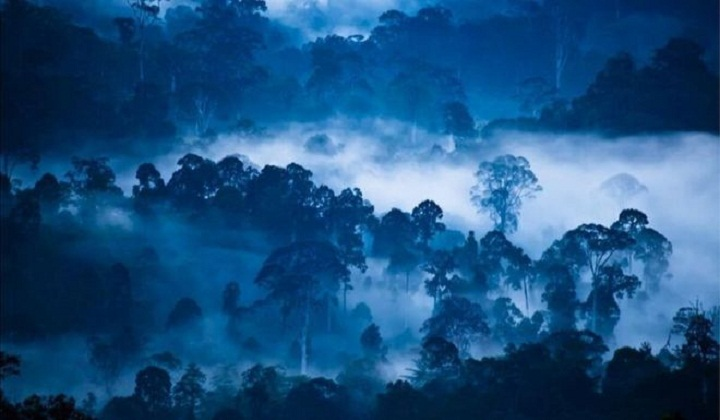 World's wilderness reduced by a tenth since 1990s