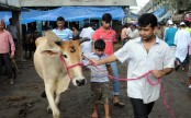 Battle of nerves at cattle markets