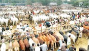 Cattle sale picks up in city amid 'good' supply